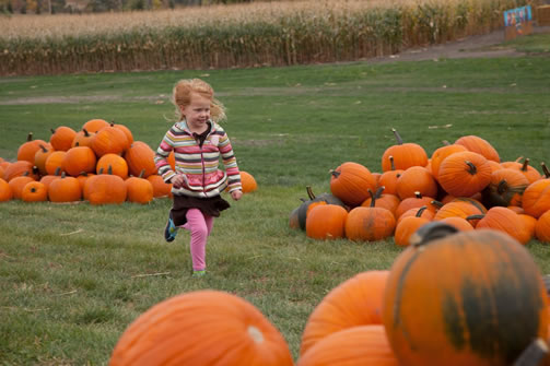 Find fall fun at Berry Acres!